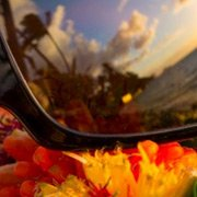 The Maui Jim Bamboo Forest H415-26B